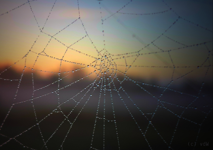 Web by Bilderwense